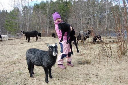 Bära lamm
