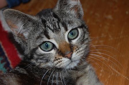 Katt beskuren